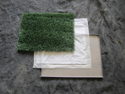 small indoor pet turf